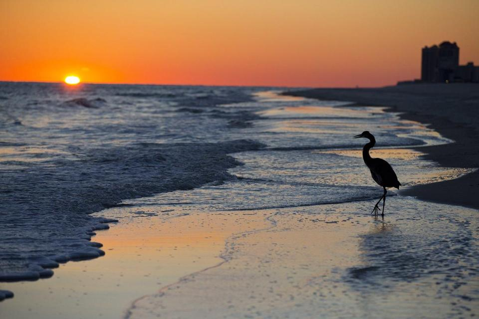 FILE - In this Nov. 19, 2014, file photo, a blue heron walks along the beach at sunset in Orange Beach, Ala. The second annual National Plan for Vacation Day is Jan. 30. The travel industry hopes Americans will use the day to schedule their vacations for the year and take advantage of any paid time off they are entitled to from their jobs. (AP Photo/Brynn Anderson, File)