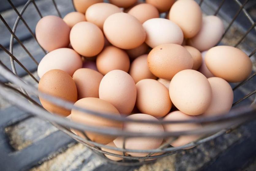 Norwegian team scrambles egg order