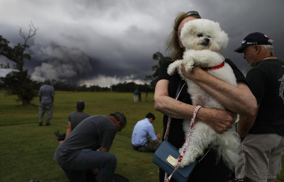 A woman hold her dog, Tzippy, at the golf course.