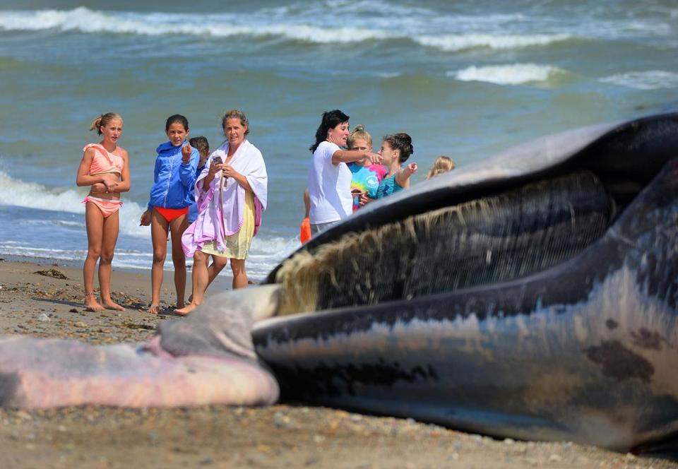 Duxbury-08/20/18-A fin whale washed up on Duxbury Beach. Beachgoers stopped by to look. as members of the New England Aquarium took measurements and photos at the scene. (Debee Tlumacki for The Boston Globe)