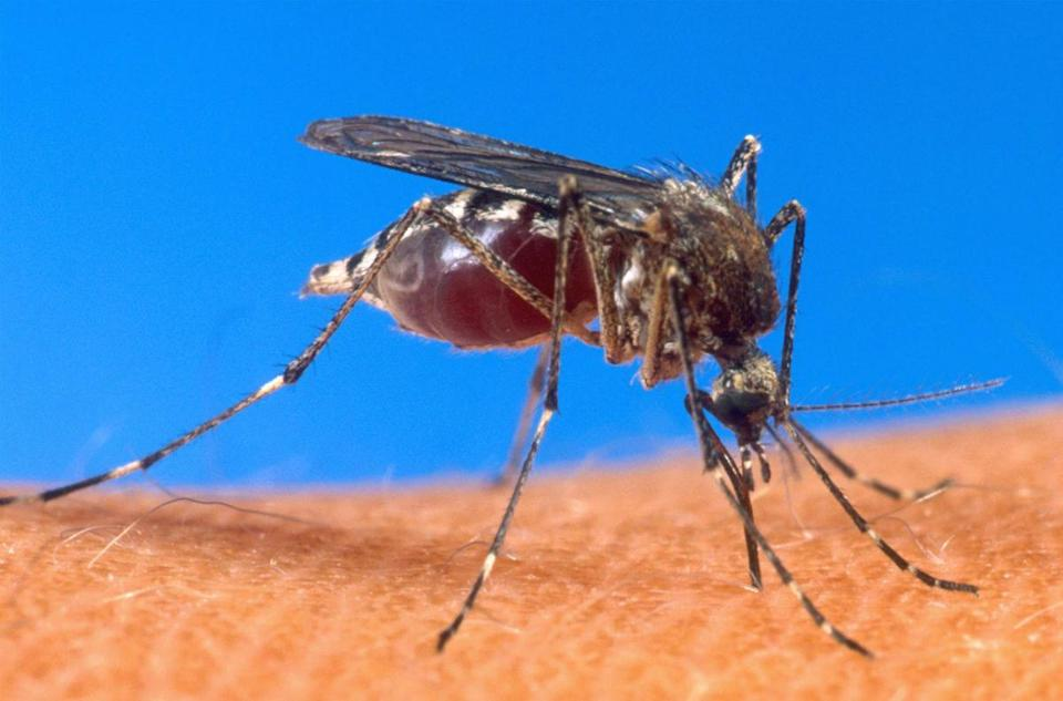 Second Boston resident diagnosed with West Nile virus