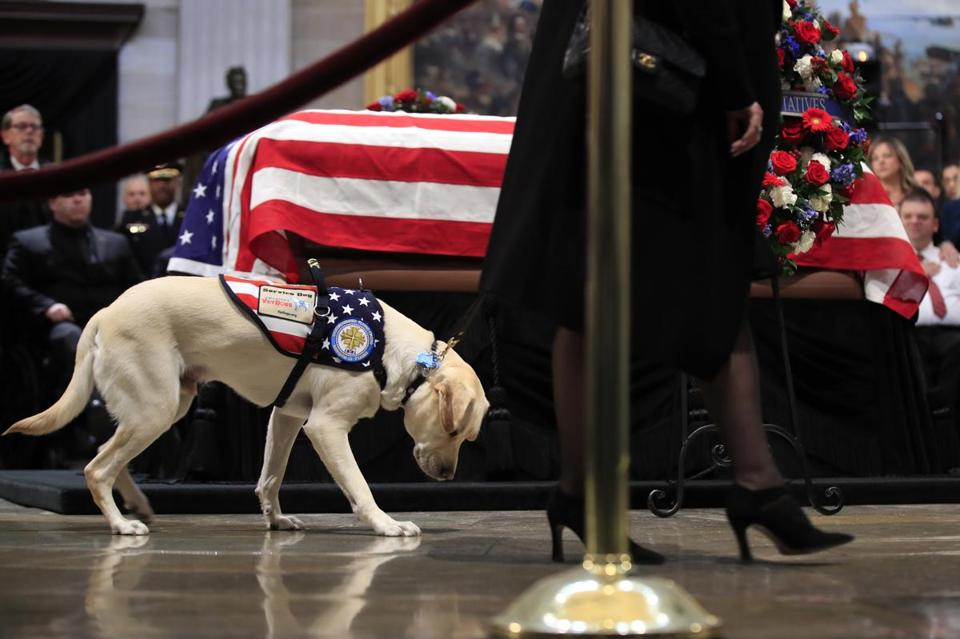 Sully the service dog visits Bush's casket in the US Capitol