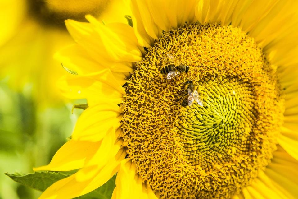 Honeybees can solve basic math problems