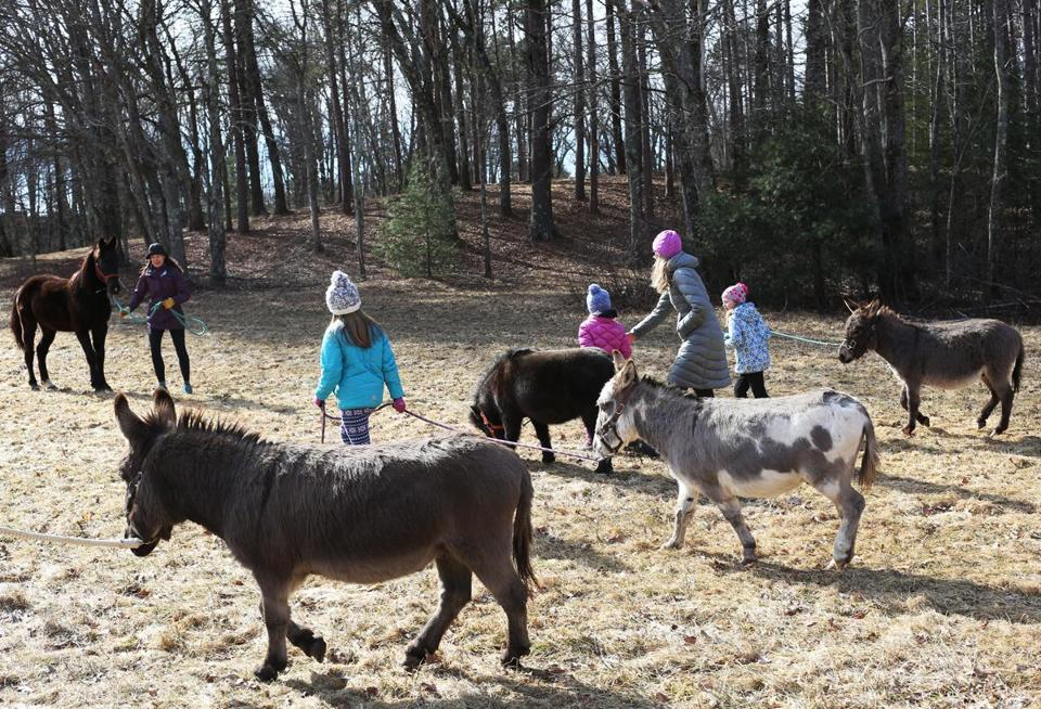 Humans and donkeys shared a stroll on Sunday, organized by the Equine Rescue Network.