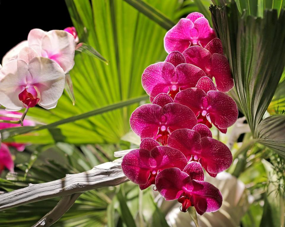 Orchids were part of the Japanese Ikebana floral arrangement.