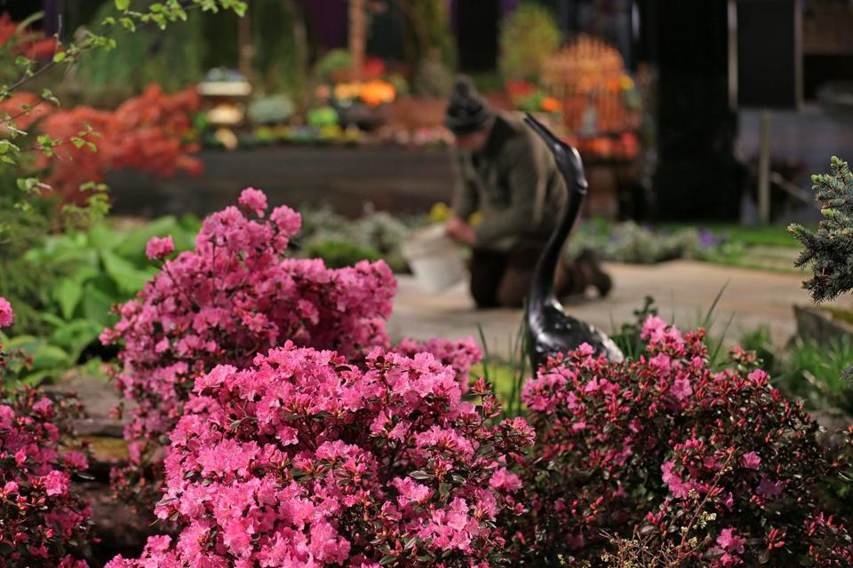 Azaleas surrounded an exhibit.
