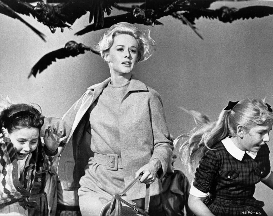 "Tippi Hedren (as Melanie Daniels) in the 1963 film ""The Birds,"" directed by Alfred Hitchcock. (trying to get names of the children) PHOTO CREDIT: Universal Studios Home Entertainment 28hitchcock"