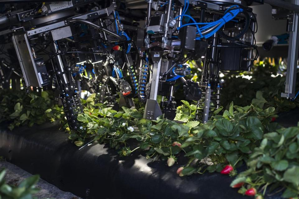 Florida-based Harvest CROO builds automatic harvesters for strawberries, like the one shown above.