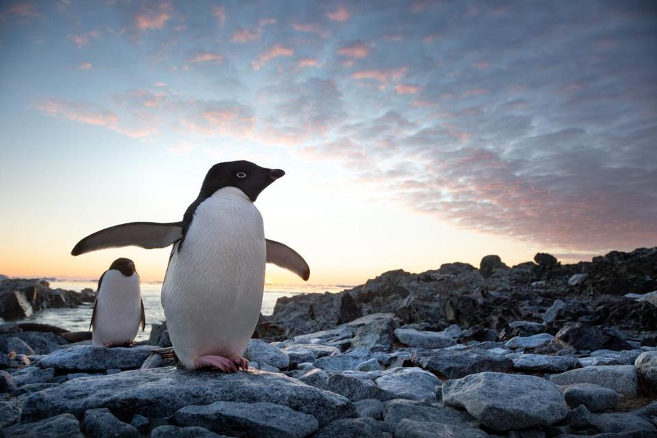 "A scene from Disneynature's documentary ""Penguins."""
