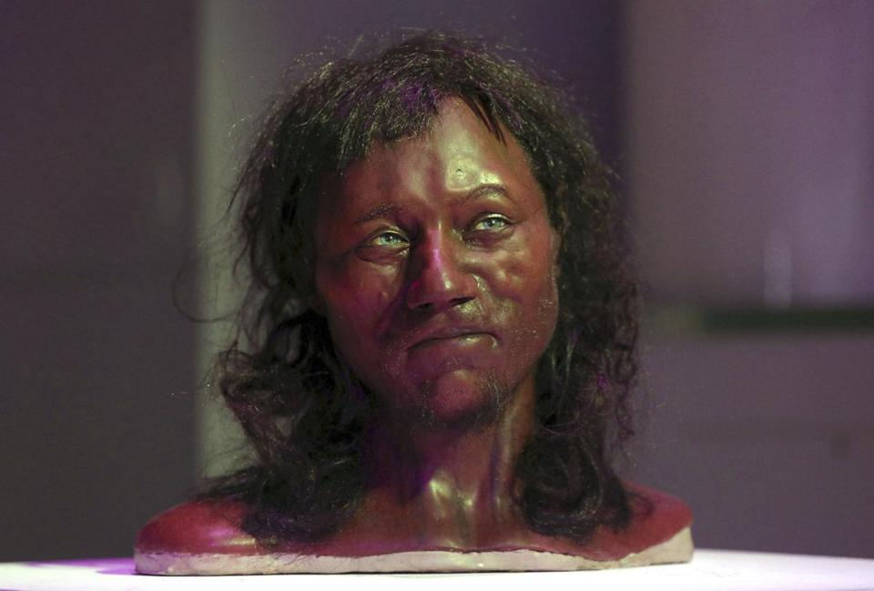 A full facial reconstruction model of a head based on the skull of Britain's oldest complete skeleton was on display.