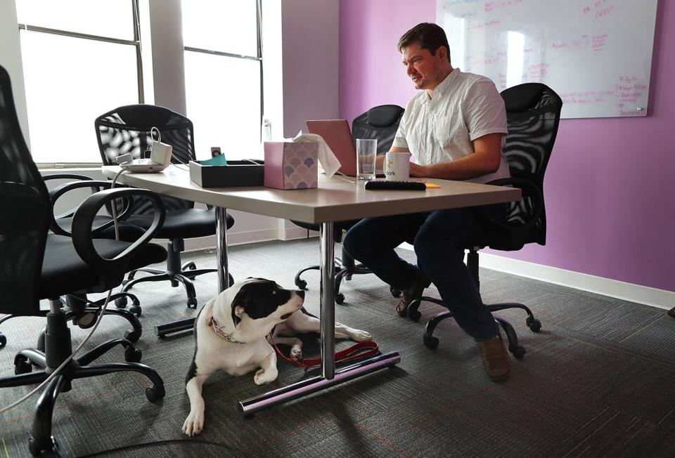 Boston-05/01/2019 Embark is a dog DNA testing company where workers take their dogs ro work. Cofounder Ryan Boyko works at a desk in a conference room with his dog Harley. Photo by John Tlumacki/Globe Staff(business)