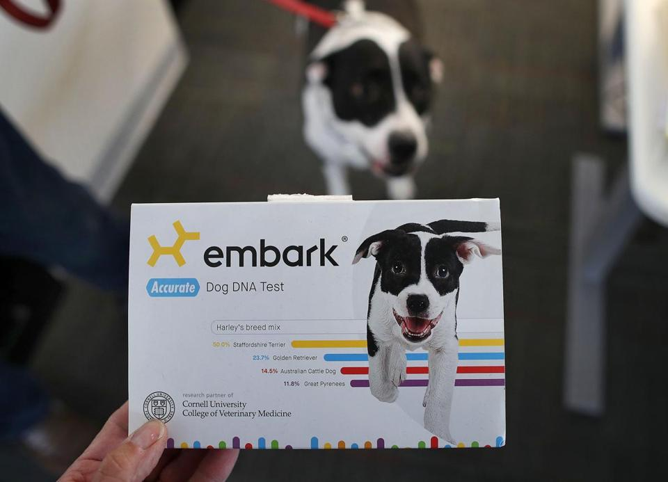 Boston-05/01/2019 Embark is a dog DNA testing company where workers take their dogs ro work. Cofounder Ryan Boyko's dog Harley is the photo on the cover of the box. Photo by John Tlumacki/Globe Staff(business)