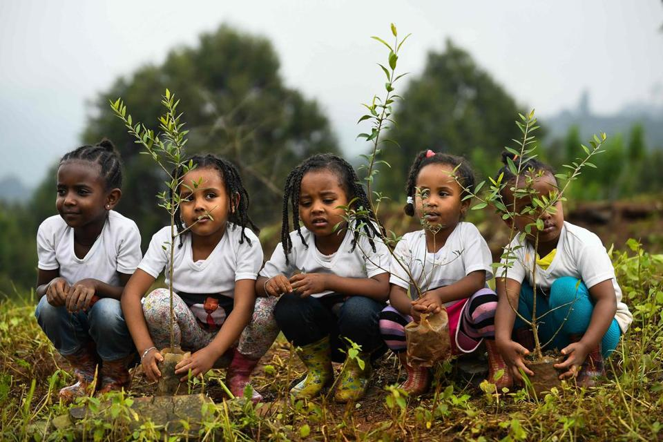 Young ethiopian girls take part in a national tree-planting drive in the capital Addis Ababa, on July 28, 2019. - Ethiopia plans to plant a mind-boggling four billion trees by October 2019, as part of a global movement to restore forests to help fight climate change and protect resources. The country says it has planted nearly three billion trees already since May. (Photo by MICHAEL TEWELDE / AFP)MICHAEL TEWELDE/AFP/Getty Images