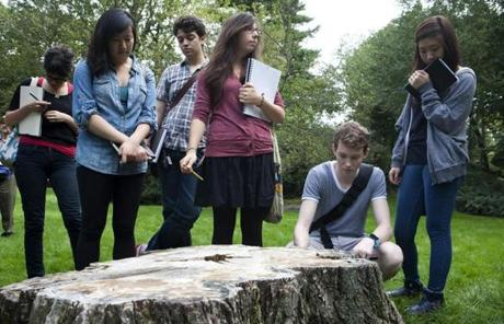 Brookline, MA -- 09/26/11 -- left to right: Andrea Parikh, Tina Xu, Adam Lowe, Samantha Anderson, Jonah Willcox-Healey, and Mikyung Park examine the stump of the ancient oak tree that was cut down at the Olmsted National Historic Site last year. Students from the Rhode Island School of Design visited the Frederick Law Olmsted National Historic Site in Brookline, MA on September 26, 2011. They will be using wood from an ancient oak tree that was cut down last year on the property to create works of art in a course they are taking called