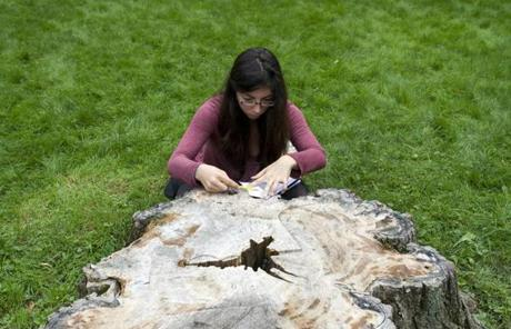 Brookline, MA -- 09/26/11 -- Samantha Anderson examines and takes notes at the stump of the ancient oak tree that was cut down at the Olmsted National Historic Site last year. The rest of the class can be seen in the background. Students from the Rhode Island School of Design visited the Frederick Law Olmsted National Historic Site in Brookline, MA on September 26, 2011. They will be using wood from an ancient oak tree that was cut down last year on the property to create works of art in a course they are taking called