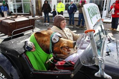 Seamus Healy of West Dennis drove an antique MG down with a stuffed wild boar in the front seat during the St. Patrick's Day parade in West Dennis. March 10, 2012.