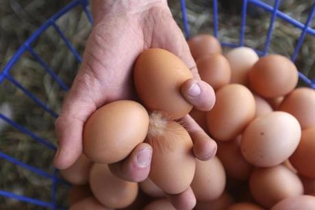 It's what's inside that makes the difference — in taste, color, texture — in eggs laid by pasture raised chickens.