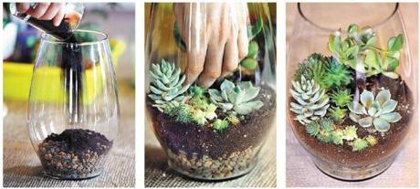 DRY TERRARIUM: Skip the moss and begin with rocks and a layer of soil. Use succulents like Jade plants and the fast-growing Hens and Chicks variety.