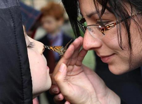 Assistant teacher Livi Rubin passed a butterfly to Benjamin Levit, 5, of Lexington at the Jewish Preschool of Lexington, where the butterflies were raised from larva stage.  May 9, 2012.