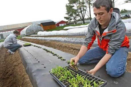 Student volunteers plant vegetables and flowers  at a produce farm attached to Stonehill College in Easton.