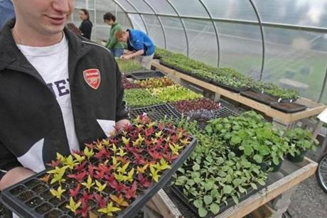 Stonehill student Rich Valeri carried flower seedlings from the greenhouse out to the fields for planting.