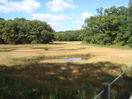 The salt marsh in the Rough Meadows sanctuary is a very important resting and feeding place for many different species of birds, officials say.