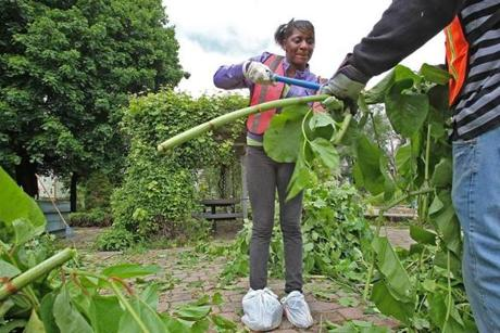Probationers , like Alexis Mills, work in the garden to fulfill their community service requirement.