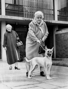 Sept. 29, 1962: Mrs. Mary Coltin of Uphams Corner in Dorchester took her new shepherd, Duke, home to serve as a watchdog as fear drove women to protect themselves from the Boston Strangler.  Coltin's friend Mrs. Florence Nyles, left, of South Boston, joined her.