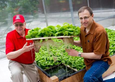 A crop of Boston bibb lettuce is checked by visiting mentor Merle Jensen (left) and Jeff Barton, one of the Hopkinton farm's founders.