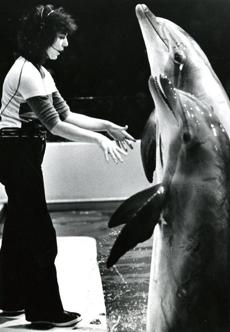 March 26, 1980: Head dolphin trainer Patricia Fiorelli, got two of her dolphins to stand on their tails during the popular dolphin show held in the ship, Discovery, that was moored next to the aquarium. In 1991, the aquarium dropped its dolphin exhibit. At that time, they had one 12-year-old female dolphin who needed company other than the two adolescent male dolphins in the tank and the facilities were too small to add more of these animals. So the female was sent to the Brookfield Zoo in Chicago and the males were sent to the Dolphin Research Center at Marathon Key, Fla.