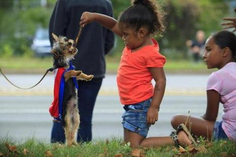 Anabel Perez, 5, of Mattapan, played with a little dog named Edge as the parade rolled along on Sunday.