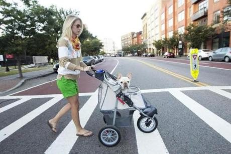 Louis, April Soderstrom's French bulldog, has back and hip issues, so a stroller helps get him out for walks.