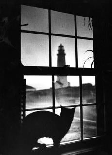 March 27 1989.  Wicky the cat looks out at the lighthouse from his perch in the lightkeeper's cottage. He is one of many pets who have lived on the island since the lighthouse was built in 1716. Many families manned the lighthouse over the years and a school was established on the island in 1910 taught by Miss Mela Hatchard of Hull, who stayed on the island during the week and returned to Hull on the weekends and school vacation.