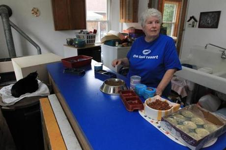 Joan Norris of Hanover has been rescuing cats for 30 years in a converted carriage house behind her home.