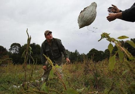 Sharon, Ma., 10/02/12, Brian Rosado, cq, harvests hubbard squash at Ward's Berry Farm. Magazine story on Boston Food Bank. Section: Magazine Suzanne Kreiter/Globe staff