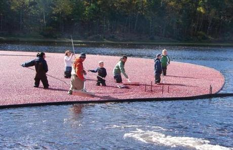 Mayflower Cranberries is one of a growing number of New England cranberry growers that combine traditional agriculture with tourism.