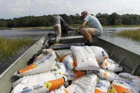 For the study, researchers hauled a ton of fertilizer to the salt marsh every four days or so in the spring and summer.