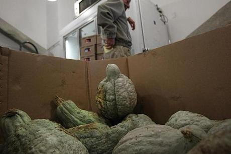 Boston, MA., 10/17/12, Scott Helman chronicles the Greater Boston Food Bank. The squash in the Marketplace at the Yawkey Distribution Center. Section: Magazine Suzanne Kreiter/Globe staff
