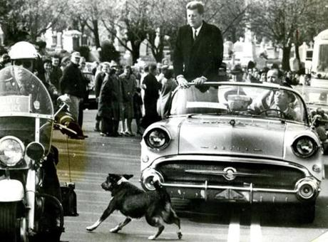 November 6, 1960:  Presidential candidate John F. Kennedy and his driver keep a sharp eye on a dog who broke through police lines to dash past the wheels of their moving car as the caravan traveled through Waterbury, CT. Travelling through 4 states in one day, Kennedy arrived in Waterbury at three a.m. where he spoke from the balcony of the Roger Smith Hotel to a crowd of 25,000 wildly responsive fans who had waited since midnight to greet him.