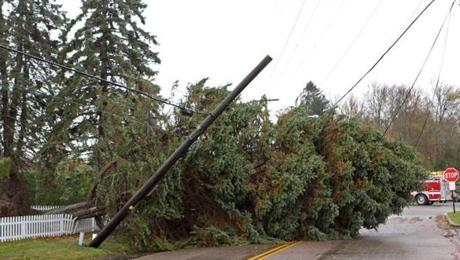 A fellen tree rested on power lines in Dartmouth Monday.