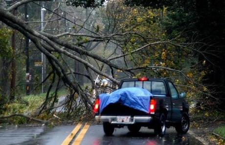 A man drove around a fallen tree on Locust Street in Falmouth.