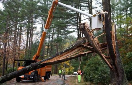 A tree crew worked to free a pine from power lines in Norwell on Tuesday.