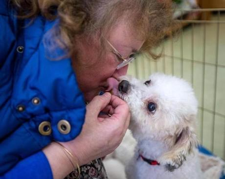 Toy Poodle Rescue President Sue Shemuga got a kiss from