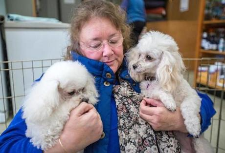 Toy Poodle Rescue President Sue Shemuga held a couple of the dogs.