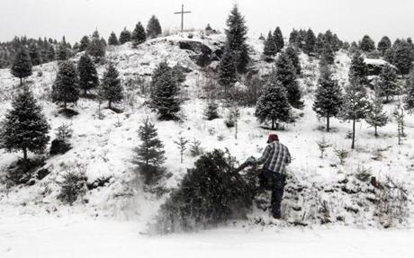 Ronald Beloin cut a Christmas tree for a customer at Beloin Tree Farm in Columbia, N.H.