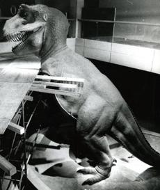 July 27 ,1972 : The full-scale model of the Tyrannosaurus Rex got situated in his new home in the West Wing. The T Rex would be exhibited in an open 55-foot-high well where it would be visible from all three floor levels. The head of the dinosaur has been on display above the entrance hall since 1966.