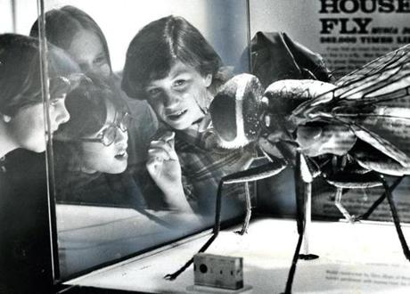 April 11, 1977: Sixth graders from the Newbury Elementary School got a different perspective on a common problem as they viewed the Common House Fly exhibit on a visit to the Museum of Science.