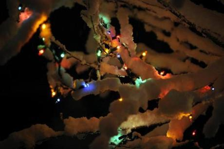 Snow covered the branches of a tree with Christmas lights during a winter storm Wednesday in Paducah, Ky.