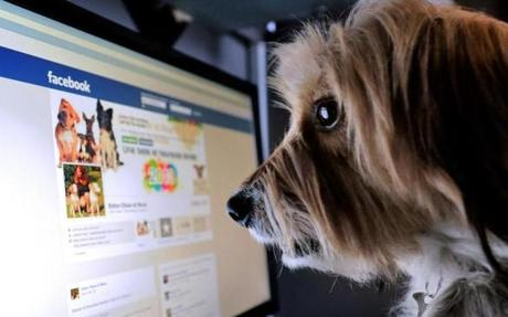 A dog stands in front of a computer screen with a facebook page opened on it.