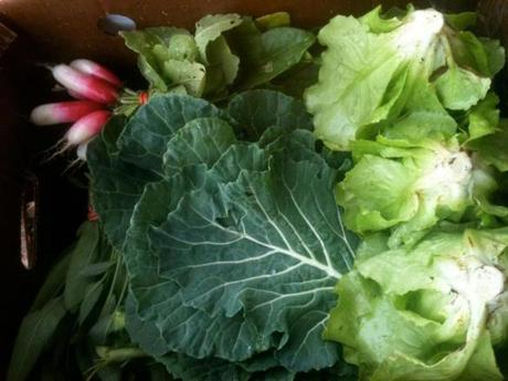 Greens harvested locally by City Growers.